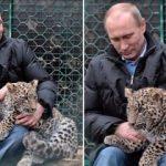 Putin'in koruma altına aldığı leopar yakalandı