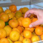 Meyve yiyerek dürüstlüğü öğreniyorlar