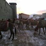 Hakkari'de akaryakıt kaçakçılığı