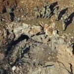 PKK şokta: 'Şoreş' öldürüldü!