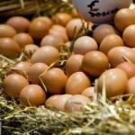 Yumurta fiyatları rekor kırdı!