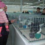 15. Evcil Kanatlı Hayvanlar Festivali