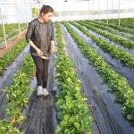 Adana'da girişimci kardeşlerden çilek serası