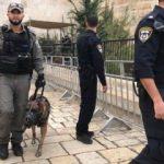 İsrail köpekleri Mescidi Aksa bahçesinde!