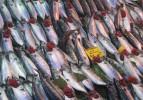 Balıkçı tezgahlarında palamut bolluğu