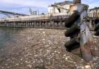 İşte çevreyi en çok kirleten şehirler