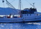 Balıkçılıkta av sezonu 1 Eylül'de başlıyor