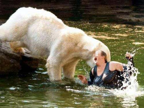 как белый медведь напал на человека видео