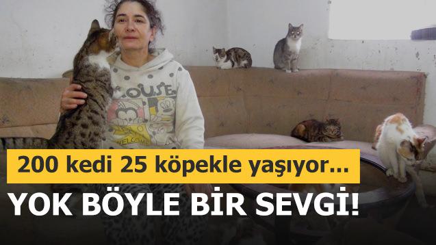 200 kedi 25 köpekle beraber yaşıyor!