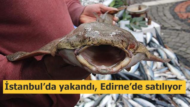 İstanbul'da yakalandı, Edirne'de satılıyor!