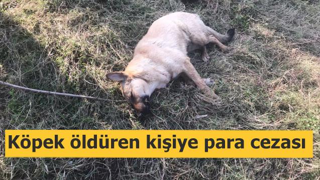 Tüfekle köpek öldüren kişiye para cezası!